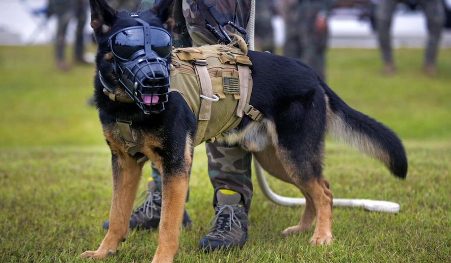 A military working dog trains at Stone Bay on Marine Corps Base Camp Lejeune, North Carolina, September 2015. (Image: Department of Defense via U.S. Marine Corps, Lance Cpl. Austin A. Lewis) ** FILE **