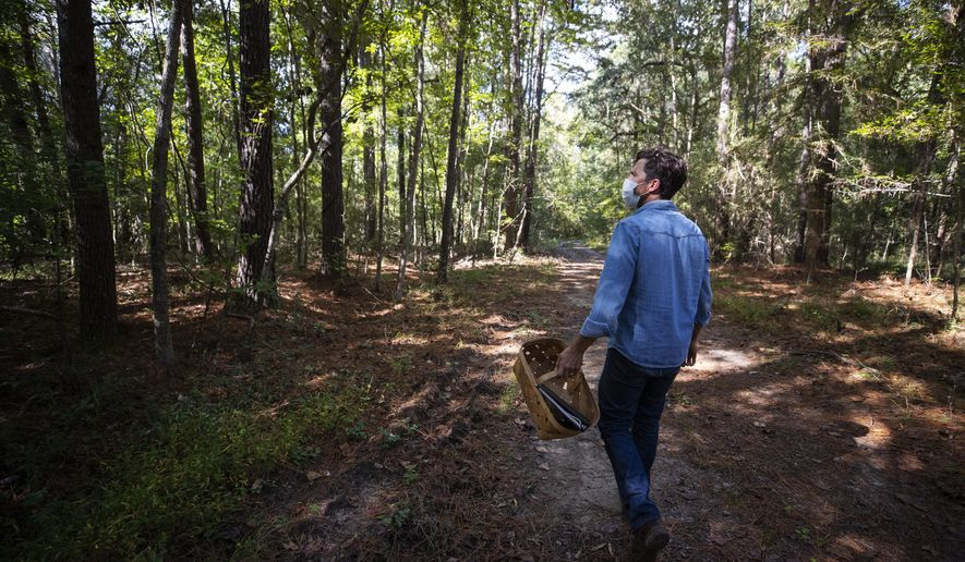 Brian Wheat forages for mushrooms in the woods at Middleton Place in South Carolina's Dorchester County on Sunday, Oct. 25, 2020. (Lauren Petracca/The Post And Courier via AP)
