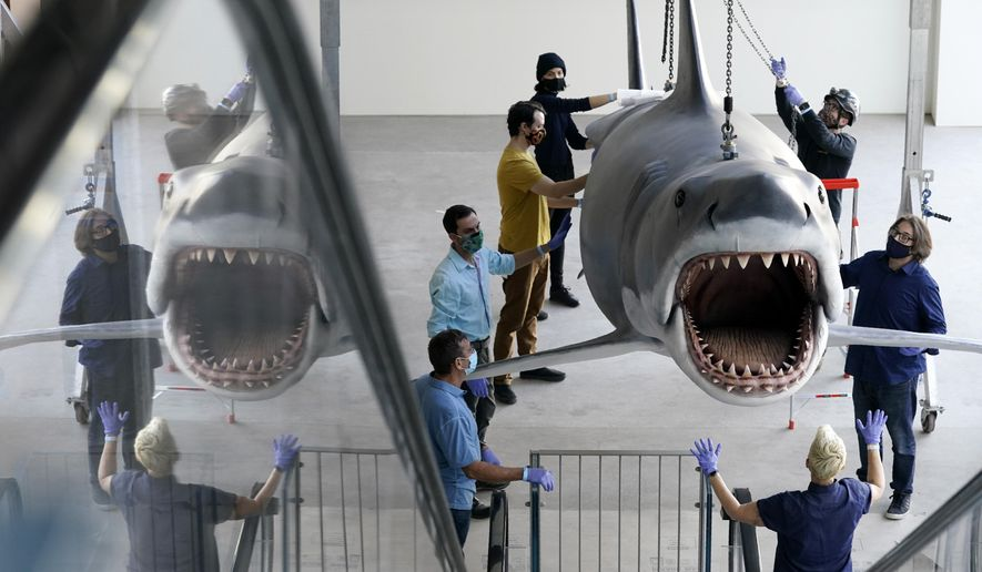 "A fiberglass replica of Bruce, the shark featured in Steven Spielberg's classic 1975 film ""Jaws,"" is raised to a suspended position for display at the new Academy of Museum of Motion Pictures, Friday, Nov. 20, 2020, in Los Angeles. The museum celebrating the art and science of movies is scheduled to open on April 30, 2021. (AP Photo/Chris Pizzello)"