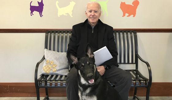 This Nov. 16, 2018, photo, provided by the Delaware Humane Association shows Joe Biden and his newly-adopted German shepherd Major, in Wilmington, Del. President-elect Biden will likely wear a walking boot for the next several weeks as he recovers from breaking his right foot while playing with his dog Major on Saturday, Nov. 28, 2020, his doctor said. (Stephanie Carter/Delaware Humane Association via AP)