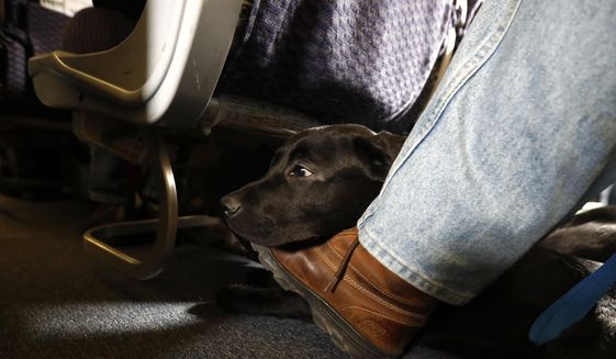 In this April 1, 2017, file photo, a service dog named Orlando rests on the foot of its trainer, John Reddan, while sitting inside a United Airlines plane at Newark Liberty International Airport during a training exercise in Newark, N.J. The Transportation Department issued a final rule Wednesday, Dec. 2, 2020, covering service animals. The rule says only dogs can qualify, and they have to be specially trained to help a person with disabilities. For years, some travelers have been bringing untrained dogs and all kinds of other animals on board by claiming they need the animal for emotional support. (AP Photo/Julio Cortez, File)