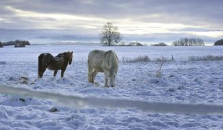 Two horses stand on a paddock in the freshly fallen snow in Kaufbeuren, southern Germany, Monday, Dec. 7, 2020.  (Karl-Josef Hildenbrand/dpa via AP)