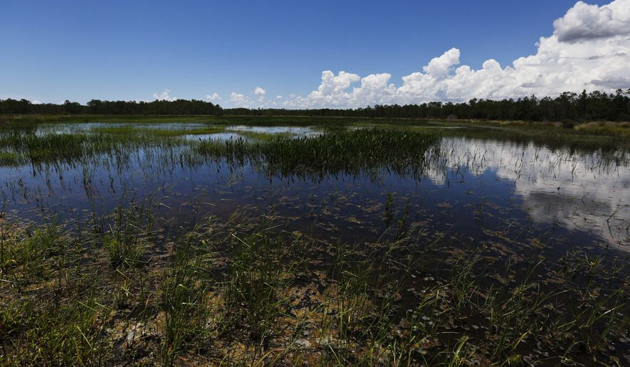 FILE- In this June 7, 2018 file photo, an emergent marsh reflects the sky at the Panther Island Mitigation Bank, near Naples, Fla. The federal government granted Florida's request for wider authority over wetland development, a move announced Thursday, Dec. 17, 2020, that came under immediate fire by environmentalist who worry that the country's largest network of wetlands could be at risk of being further destroyed. (AP Photo/Brynn Anderson, File)