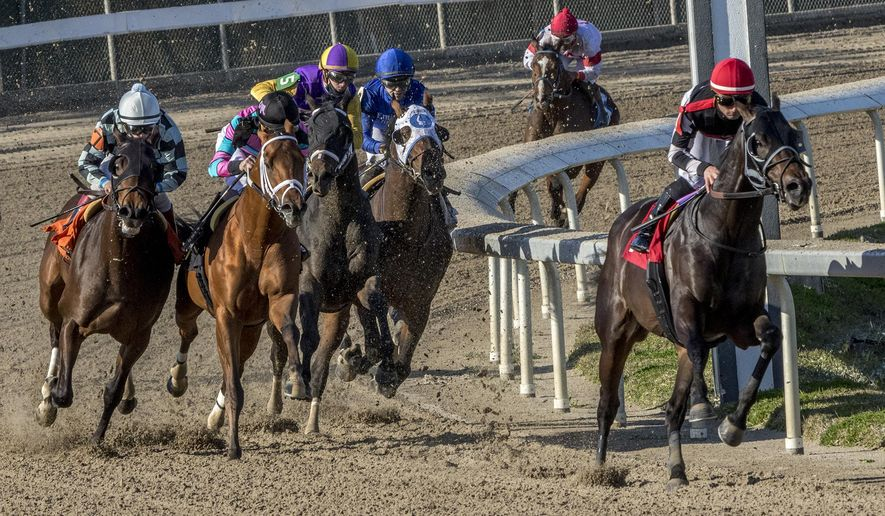 In this image provided by Hodges Photography, Quick Tempo with Adam Beschizza aboard led gate to wire to win the 71st running of the Sugar Bowl Stakes horse race at Fair Grounds race course, Saturday, Nov. 19, 2020, in New Orleans. (Jan Brubaker/Hodges Photography via AP
