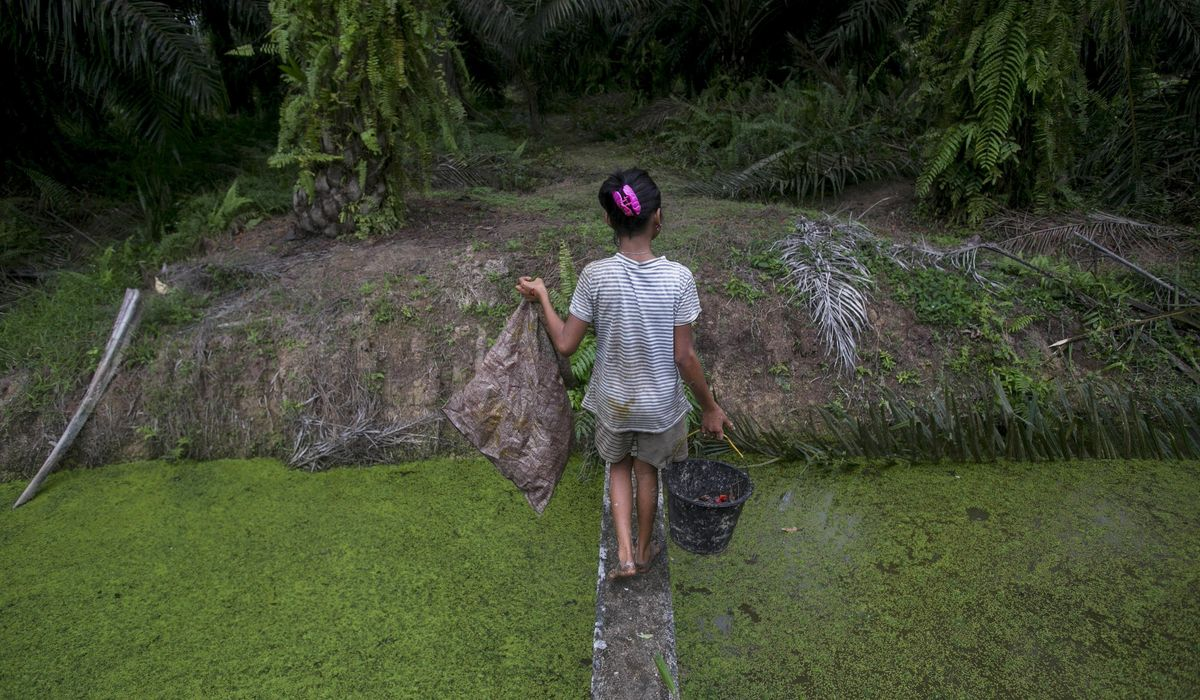 World child labor numbers edged up last year after 20-year decline