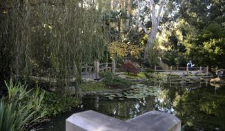 A person seen from another viewing area stands on the Torii Landing overlooking the reflecting pond with koi and water lilies in the Japanese Garden at Lotusland, on Monday, Nov. 23, 2020, in Montecito, Calif. The lotuses bloom in June, July and August in the pond. The central pond was recently reconstructed, and afterwards, aquatic plants and a new biofiltration system were added. (AP Photo/Pamela Hassell)