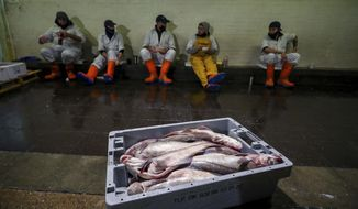 Staff at Midland Fish in Fleetwood take a break from preparing fish for sale, at the docks in Fleetwood, Lancashire, England, Thursday, Jan. 28, 2021. The introduction of new checks and paperwork since the end of the Brexit transition period on Dec. 31 has caused huge disruption to exports of fresh fish and seafood to the EU, with producers becoming increasing frustrated at the lack of Government action. (Peter Byrne/PA via AP)