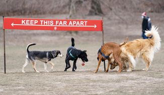 Dogs play around a social distancing sign during off-leash morning hours at the Long Meadow in Prospect Park, Sunday, Jan. 31, 2021, in the Brooklyn borough of New York. Go to any dog park right now and you'll probably find lively pandemic puppies, along with new owners learning the ins and outs of off-leash play. One of the silver linings of the pandemic is that many people are discovering the joys of dog ownership. (AP Photo/John Minchillo)