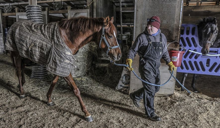 Eric Foster leads My merry Lou from the stables at Foster Family Racing, Wednesday, Feb. 17, 2021, in Utica, Ky. Foster and his wife, Brooklyn, train and race thoroughbred race horses on the farm. (Greg Eans/The Messenger-Inquirer via AP)