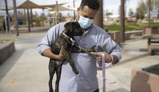 "Ronald Pipkins, who was the first presumptive positive case of COVID-19 in Nevada, walks his dog at Siegfried and Roy Park in Las Vegas, on Feb. 20, 2021. A year after he became ""Patient Zero"" in Nevada's COVID-19 outbreak, Ronald Pipkins is still battling the lingering effects of the coronavirus. He gets up to do something but forgets why. ""My body's not ready yet,"" the retired Marine told the Las Vegas Review-Journal. ""And that's kind of depressing because I'm a Marine."" (Erik Verduzco/Las Vegas Review-Journal via AP)"