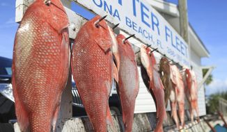 FILE - In this Sept. 14, 2012 file photo, the haul of Red Snapper and Triggerfish from the fishing boat Waterproof hang on the rack at the Critter Fleet in Ponce Inlet, Fla.   A new study estimates there are three times the number of red snapper previously thought to swim in the Gulf of Mexico. Congress appropriated $9.5 million for the study in 2016, as arguments grew heated between recreational anglers and federal regulators. (David Massey/The Daytona Beach News-Journal via AP)