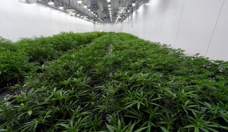 Virginia has enacted legislation that will allow adults who are 21 and older to possess and grow a limited supply of marijuana starting July 1. However, critics fear that further decriminialization of cannabis may worse the nation's drug crisis. (ASSOCIATED PRESS)