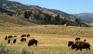 The Denver Parks and Recreation Department donated 14 bison to American Indian tribes this month as reparations. The first-of-its-kind gift from Denver will help reintroduce wild bison to their homes. All 14 bison were adult females and about half might be pregnant. (ASSOCIATED PRESS)