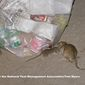The number of complaints about rodents increased 30% last year during the pandemic when restaurants closed for indoor dining, and residents ate at home and threw away containers, the District's top rat contol expert says. (Photo courtesy of Tom Myers of the National Pest Control Association)