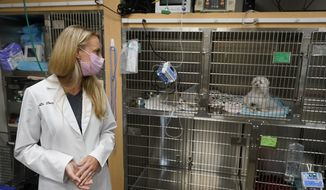 Dr. Katarzyna Ferry, left, looks over at a dog named Wendy who is being treated for a flare-up of Addison's disease, Monday, April 12, 2021, at the Veterinary Specialty Hospital of Palm Beach Gardens in Palm Beach Gardens, Fla. Forced to stay at home due to the pandemic, Americans adopted nearly 12 million pets last year meaning the average vet clinic saw nearly 400 new patients last year. (AP Photo/Wilfredo Lee)