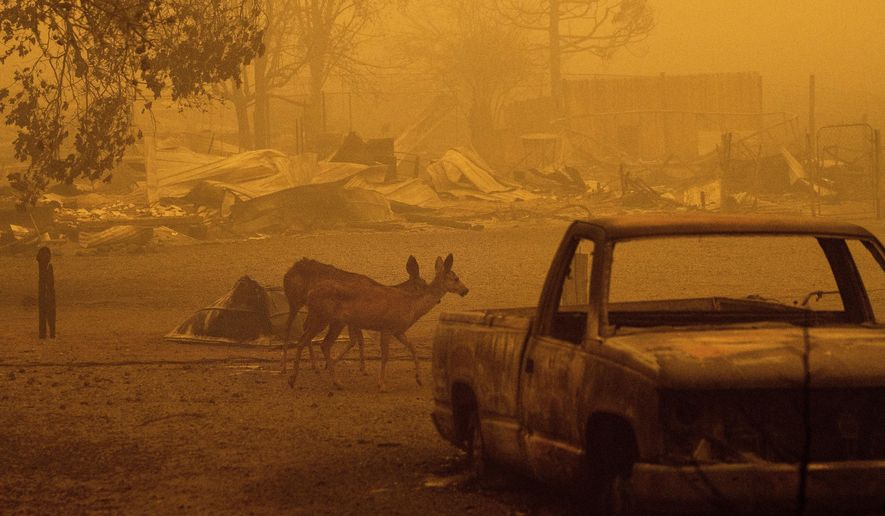 Deer wander among homes and vehicles destroyed by the Dixie Fire in the Greenville community of Plumas County, Calif., Friday, Aug. 6, 2021. (AP Photo/Noah Berger)