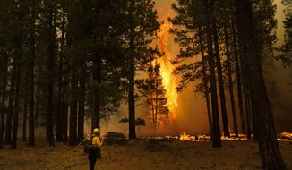 A tree flares up as firefighters continue to battle the Caldor Fire near South Lake Tahoe, Calif., Tuesday, Aug. 31, 2021. A huge firefighting force gathered Tuesday to defend Lake Tahoe from the raging wildfire that forced the evacuation of California communities on the south end of the alpine resort and put others across the state line in Nevada on notice to be ready to flee. (AP Photo/Jae C. Hong)