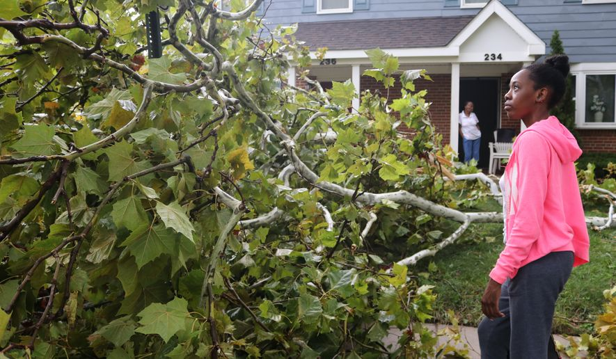 Alexis Davis looks at a tree that fell in her yard on Wednesday, Sept. 1, 2021, in Annapolis, Md., where a tornado downed trees and made debris fly as the remnants of Hurricane Ida moved across the state. (AP Photo/Brian Witte)